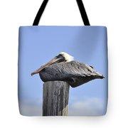 Brown Pelican 2 Tote Bag