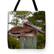 Brown Pelican At Rest Tote Bag