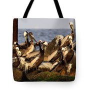 Brown Pelicans - Beauty Of Sand Island Tote Bag
