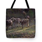 Brown Swiss Cows Coming Home Tote Bag