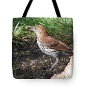 Brown Thrasher Tote Bag