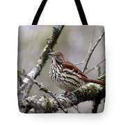 Brown Thrasher - Spot Tote Bag