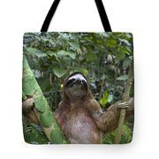 Brown Throated Three Toed Sloth Male Tote Bag by Suzi Eszterhas