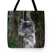 Brown Throated Three Toed Sloth Mother Tote Bag