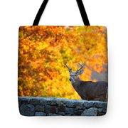 Buck In The Fall 07 Tote Bag