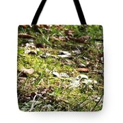 Buckeye Lakeview Tote Bag