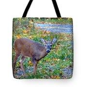 Buckly Tote Bag