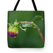 Bud With Drops Tote Bag