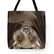 Buettikofers Epauletted Bat Epomops Tote Bag