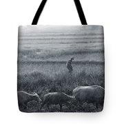 Buffalo And Monsoon Rain Tote Bag by Anonymous
