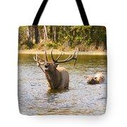 Bugling Bull Elk And Calf Colorado Rut 4 Tote Bag