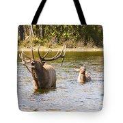 Bugling Bull Elk And Calf Colorado Rut 5 Tote Bag