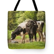 Bull And Cows Grazing On Grass In Farm Maine Tote Bag