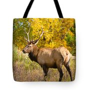 Bull Elk Autum Portrait Tote Bag