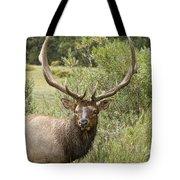 Bull Elk Eyes Tote Bag by James BO  Insogna