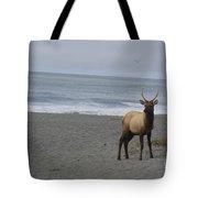 Bull Elk On Calfornia Coast Tote Bag