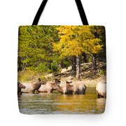 Bull Elk Watching Over Herd 2 Tote Bag