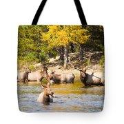 Bull Elk Watching Over Herd 4 Tote Bag
