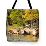 Bull Elk Watching Over Herd 5 Tote Bag