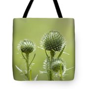 Bull Or Spear Thistle Buds- Cirsium Vulgare Tote Bag