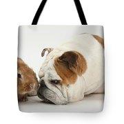 Bulldog And Lionhead-cross Rabbit Tote Bag