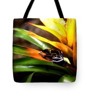 Bumble Bee Dart Frogs Tote Bag