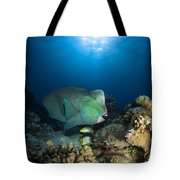Bumphead Parrotfish, Australia Tote Bag