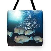 Bumphead Parrotfish Tote Bag