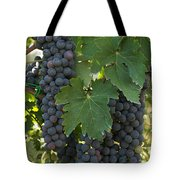 Bunches Of Sangiovese Grapes Hang Tote Bag