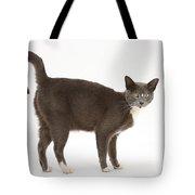 Burmese-cross Cat Tote Bag