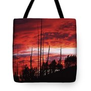 Burnt Trees Against A Sunset Tote Bag