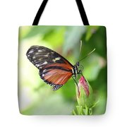 Butterfly At Rest Tote Bag