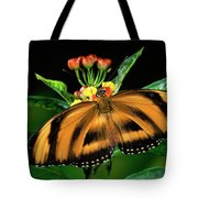 Butterfly Dryadula Heliconius Feeding Tote Bag