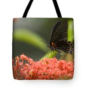 Butterfly Papilio Memnon Feeding Tote Bag