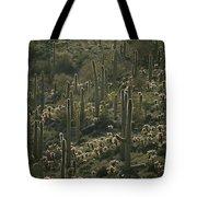 Cacti Near Tucson, Arizona Tote Bag