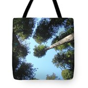 California Redwood Trees Fine Art Prints Forest Tote Bag