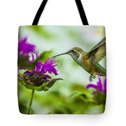 Calliope Hummingbird At Bee Balm Tote Bag