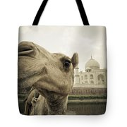 Camel In Front Of The Yamuna River And Tote Bag