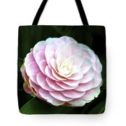 Camellia Twenty-two  Tote Bag
