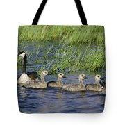 Canada Geese Branta Canadensis Tote Bag