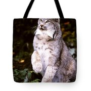 Canada Lynx With Paw Up   Tote Bag