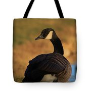 Canadian Goose Closeup By A Pond Tote Bag