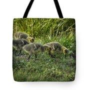 Canadian Goose Gosslings Tote Bag