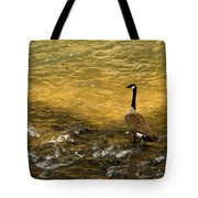 Canadian Goose In Golden Sunlight Tote Bag