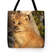 Canadian Lynx Kitten, Alaska Tote Bag