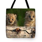 Canadian Lynx Kittens Looking Tote Bag
