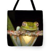 Canal Zone Tree Frog Tote Bag
