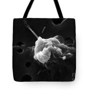 Cancer Cell Death 6 Of 6 Tote Bag by Science Source
