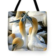 Cape Gannet Courtship Tote Bag by Bruce J Robinson