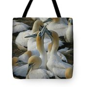 Cape Gannets Tote Bag
